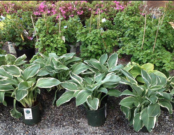 Grasshoppers Garden Center has a large selection of plants