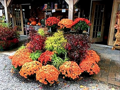 Autumn Color at Grasshoppers Garden Center